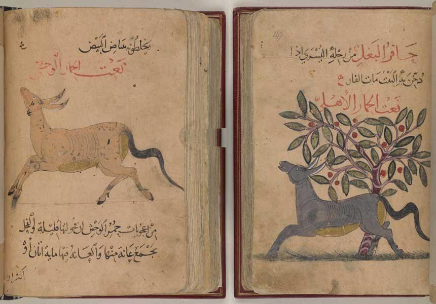 عت الحيوان لمؤلف مجهول، نسخة المتحف البريطاني