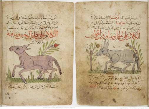 مخطوطة نعت الحيوان، لعبيد الله بن جبريل بن بختيشوع، نسخة المكتبة الوطنية بباريس