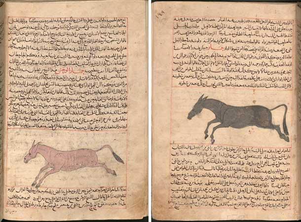 عجائب المخلوقات للقزويني، نسخة مكتبة ولاية بافاريا في ميونخ برقم (Cod.arab. 464)