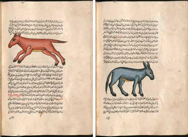 عجائب المخلوقات للقزويني، مكتبة ولاية بافاريا في ميونخ برقم (Cod.arab. 463)