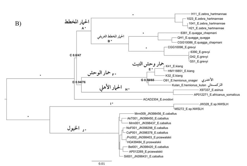 الخريطة الجينية لفصيلة الخيليات