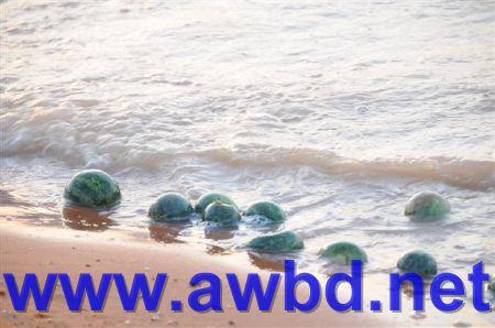 http://www.awbd.net/images/sael/kasr6_14_11_1429.jpg