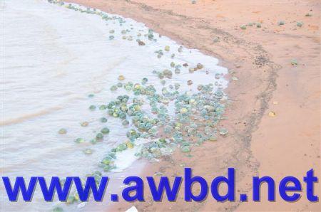 http://www.awbd.net/images/sael/kasr7_14_11_1429.jpg